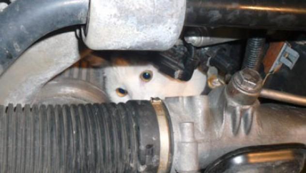 Котка под горещ ламаринен покрив