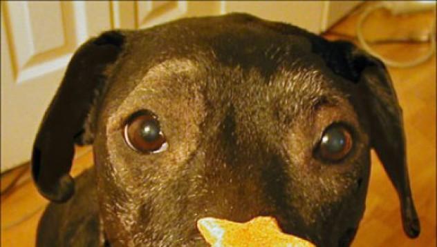 Японец убива бивш министър заради куче