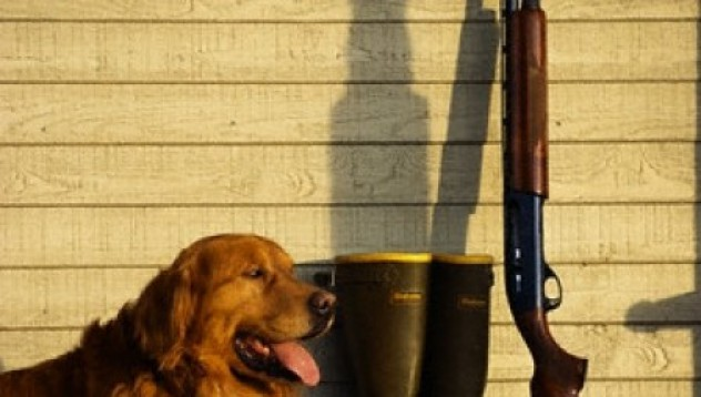Куче прострелва стопанин