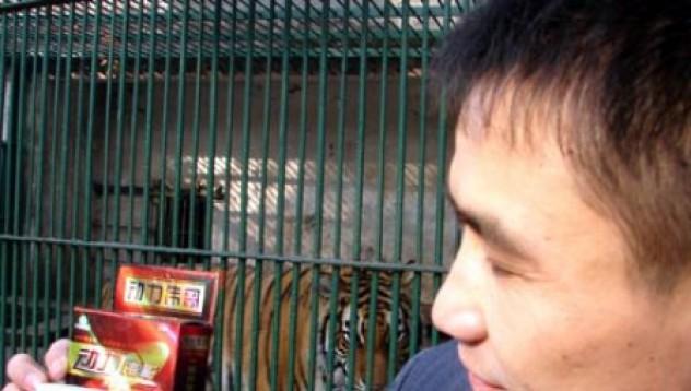 Тигър – неможач