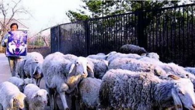 Заблудени овце