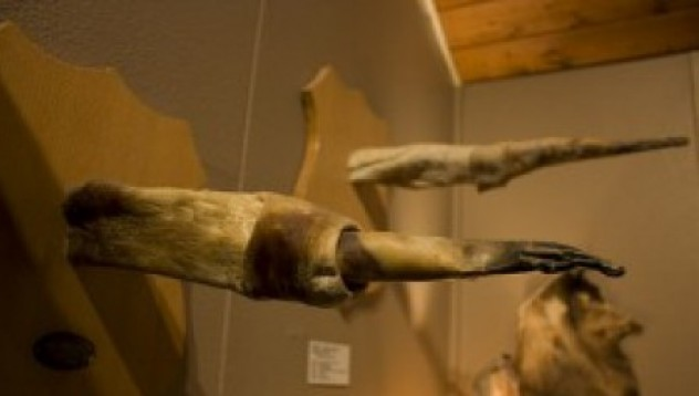Най-странните музеи в света