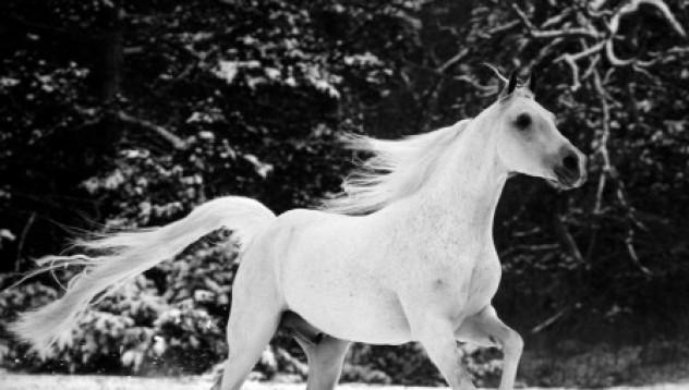 Мъж арестуван за яздене на бял кон