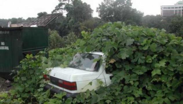Да си посадиш кола