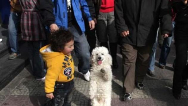 Куче ходи на две лапи