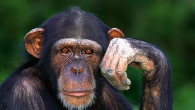 Маймуна замеря хора с камъни