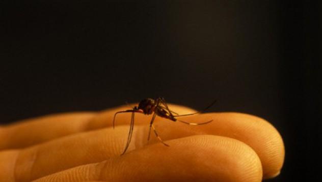 Лазер срещу маларията