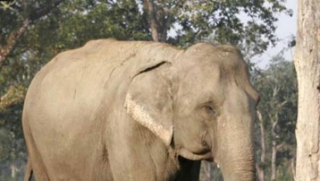 Слонът мой приятел