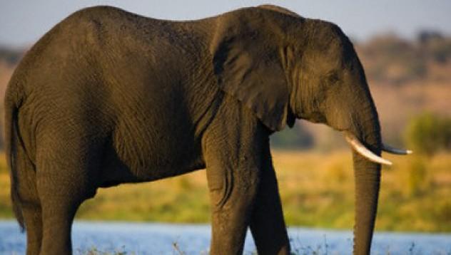 Камион блъска слон