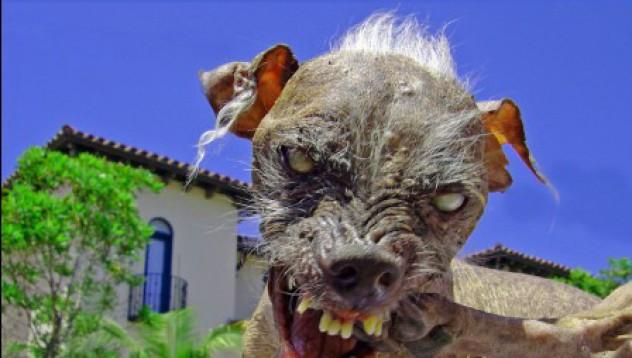 Най-грозните животни на света