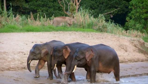 Прецакахме се с гей слон!