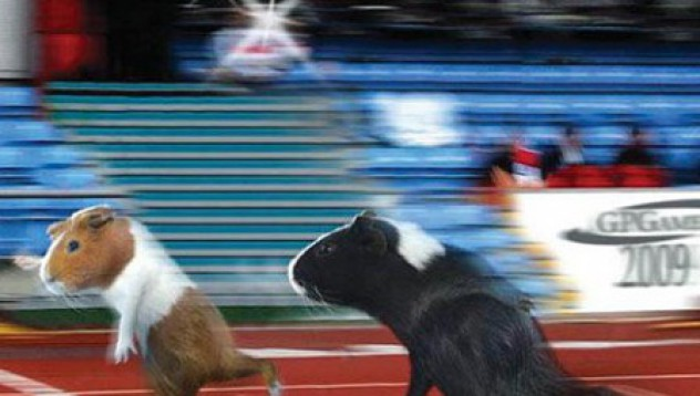 Свински олимпийски игри