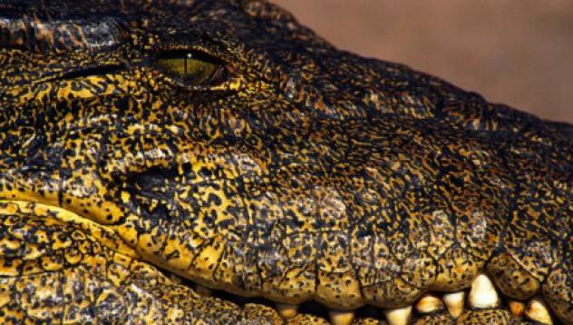Кризата остави крокодил без дом