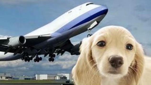 Авиокомпания за домашни любимци