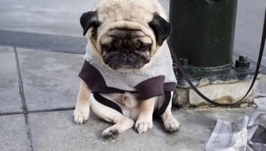 Най-тъжното куче на света