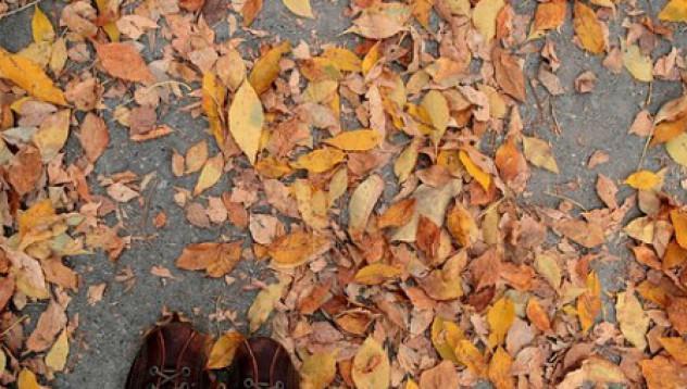 Есенна елегия