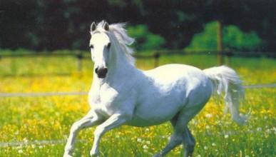 Содомия с коне