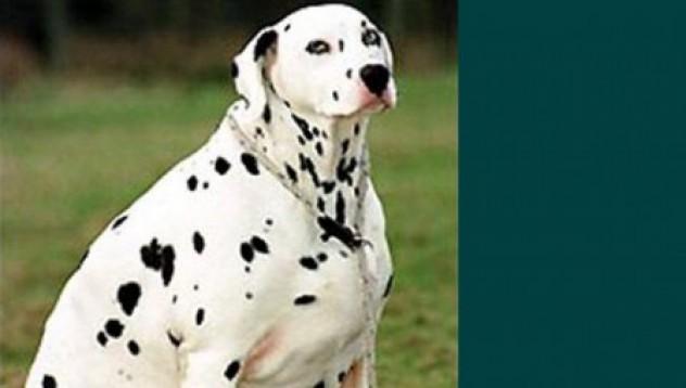 Тъпкач на куче