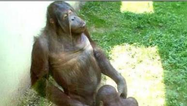 Маймунска свирка