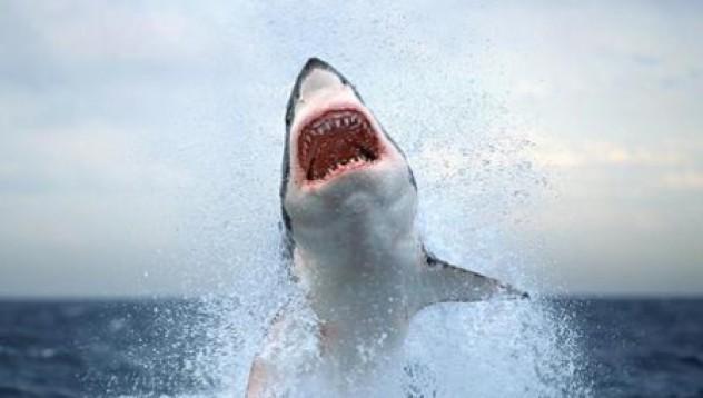 Баба оцеля след нападение на акула