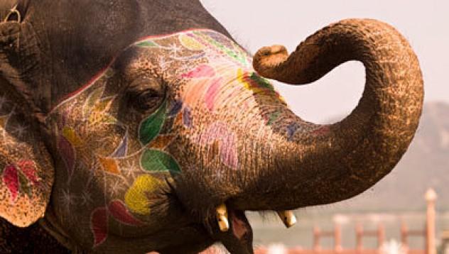 Слонът, мой неприятел