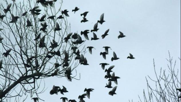 Птици и антиоксиданти
