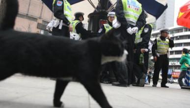 Котка - полицай