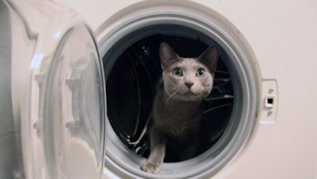 Изпират котка в пералня