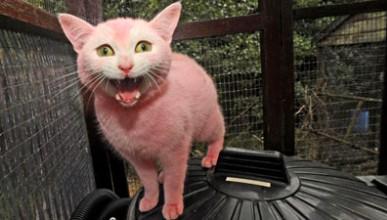 Да си боядисаш котката