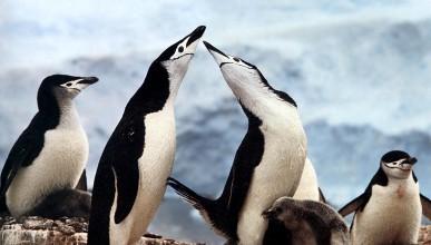 Пингвинска история