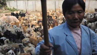 Жена живее с 1500 кучета
