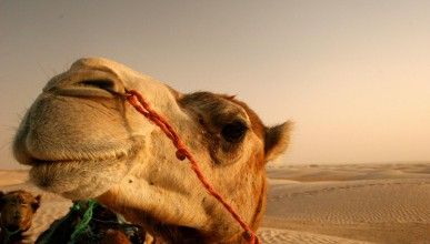 Пустинен проблем