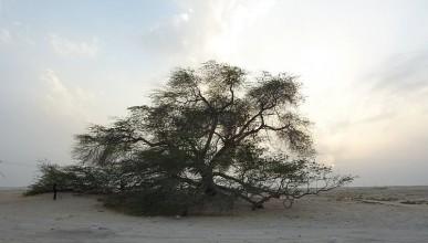 Дървото на живота