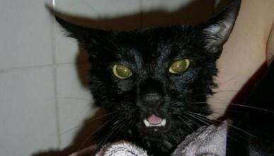 Котката шпионин