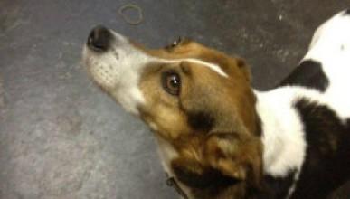 Туитър помогна за изгубено куче