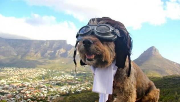 Кучето, което обиколи света