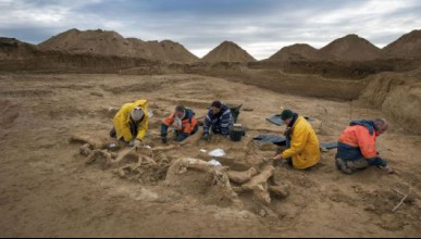 Откриха скелет на мамут