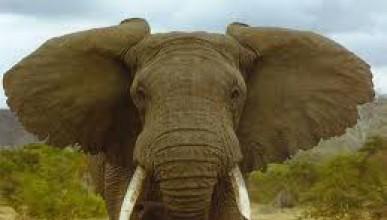 Слонско отмъщение