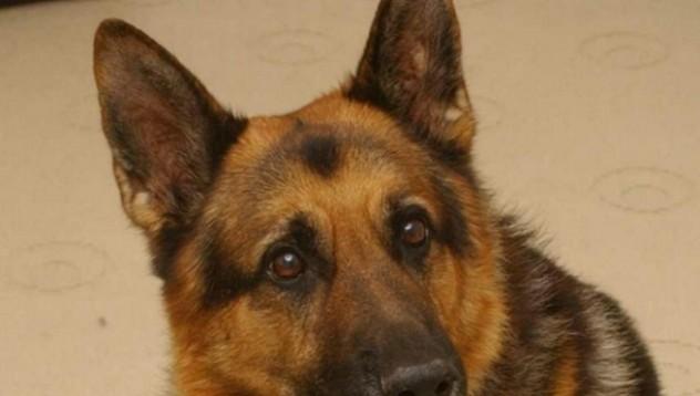 Куче спасява стопанката си