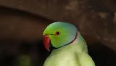 Папагал стана модна икона