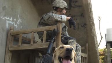 Някои специални животни през войните