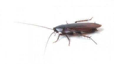1 милион свободни хлебарки