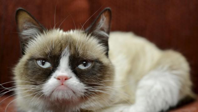 Сърдитата котка става рекламно лице