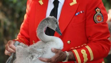Лебед заподозрян в шпионаж