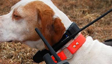 GPS за кучето