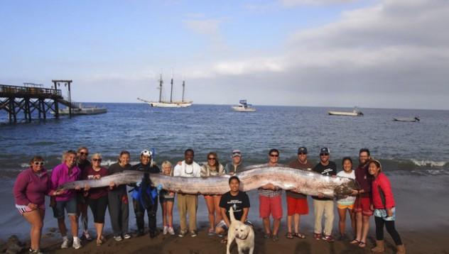 15-метрова риба в Калифорния