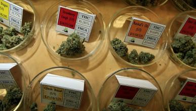 Невероятни полезни действия на медицинската марихуана