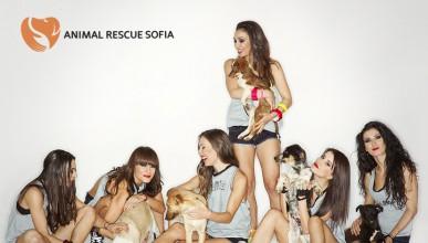 Animal Rescue Sofia има нужда от твоята помощ