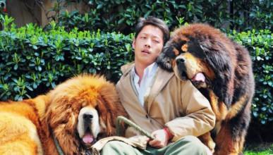 Куче за 1.16 милиона паунда