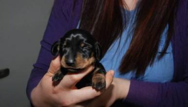 Клонирането на кучета е възможно